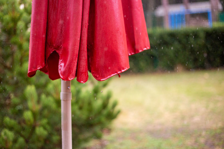 Close-up of wet red leaf hanging on plant
