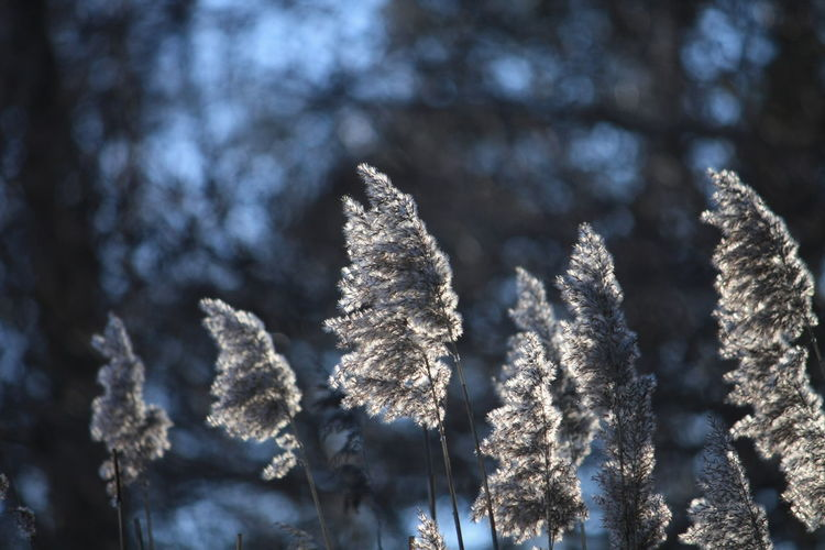 Beauty In Nature Blue Sky Cats Church Close-up Cold Temperature Day Deatn Forest Good Morning Lake March Nature No People Outdoors Russia Russian Birch Russian Nature Snow Spring Springtime Stream Sun Tree Water Winter