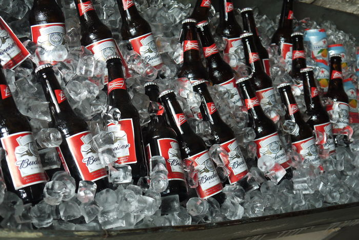 Arrangement Beer Bottle Budweiser Container Food And Drink Glass - Material Ice Ice Bucket Indoors  Large Group Of Objects Side By Side