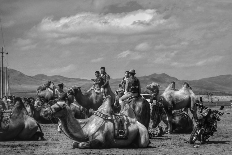 Black And White Mongolia Real People Монгол улс Steppe Outdoors Day Animal Themes Tourism Travel Destinations Riding Sky Cloud - Sky Camel Group Of Animals Herbivorous
