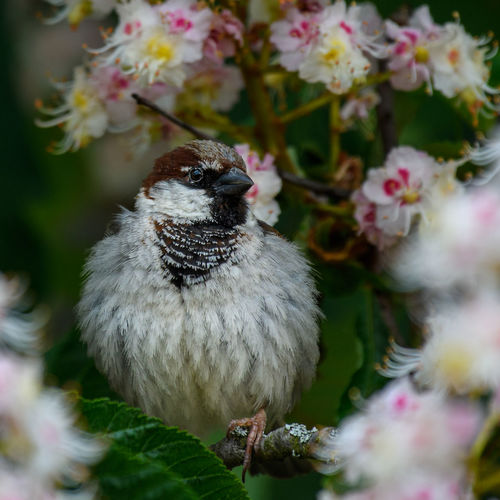 Close-up of sparrow on flower