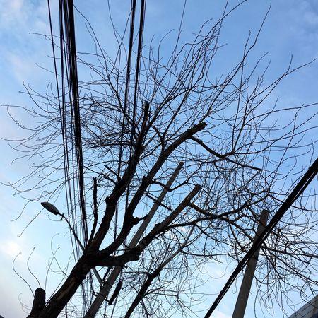Tree S K Y
