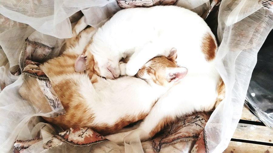 Yin Yang Cats Position Sleeping Comfortable Pet Cuties Love