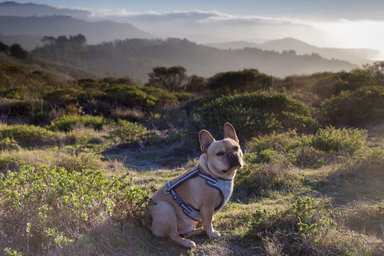 Dog looking at mountains