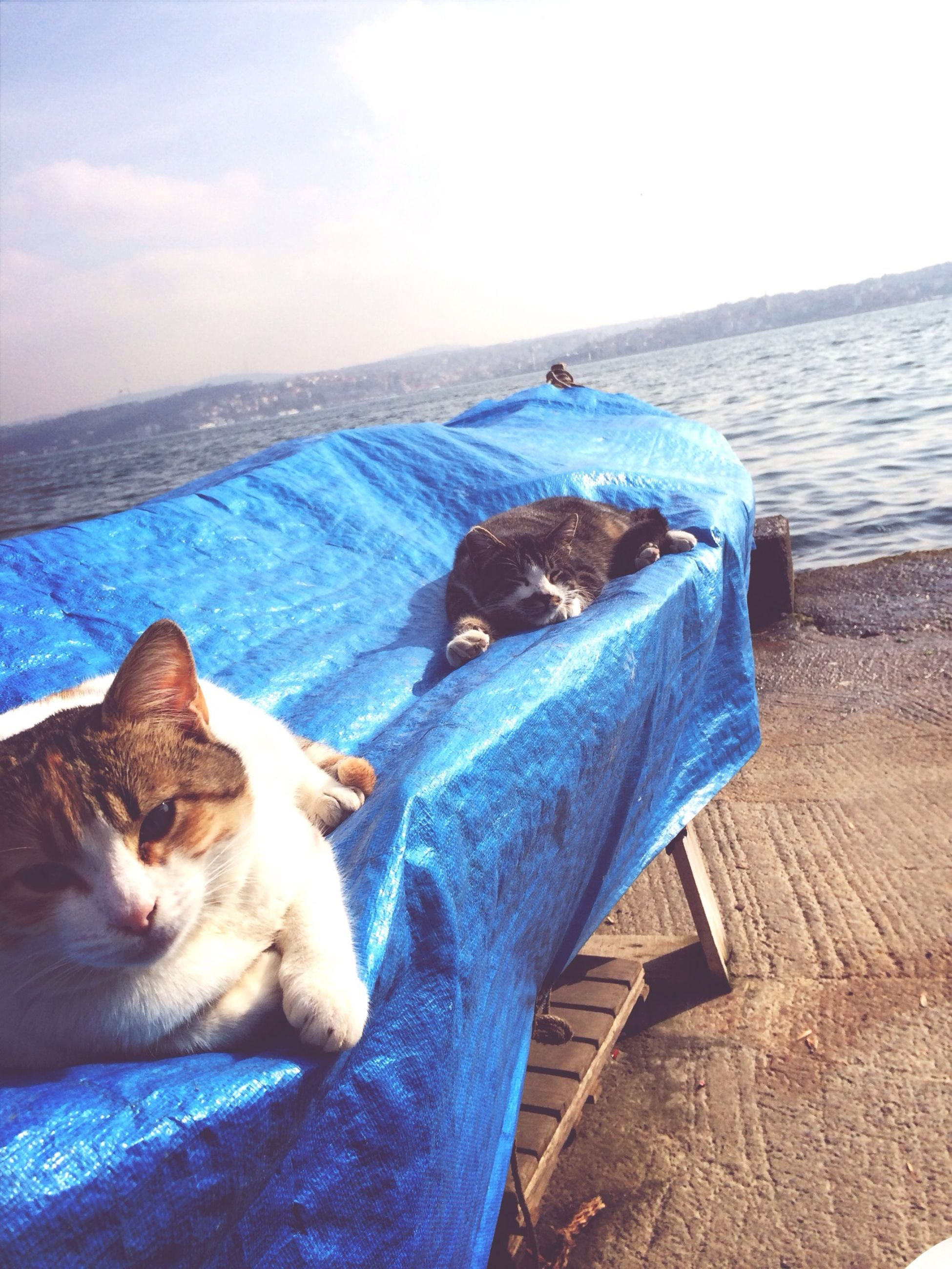 pets, domestic animals, mammal, one animal, animal themes, dog, domestic cat, relaxation, sea, resting, lying down, sky, cat, blue, water, nature, sitting, feline, day, sleeping