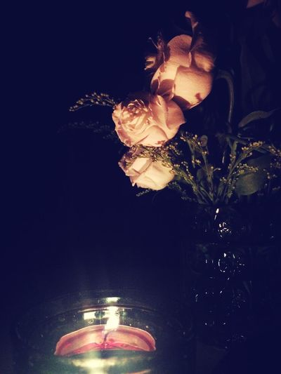 Night Candle Flower What Does Peace Look Like To You?