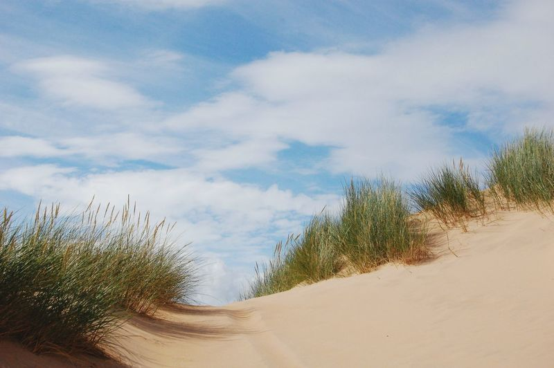 Scenic view of sand dunes at beach against sky