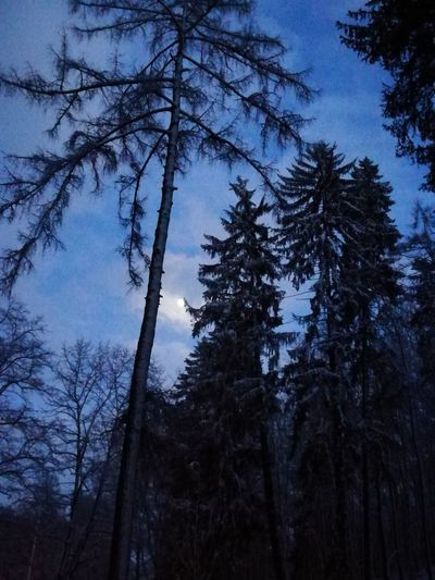Snow ❄ Landscape Landscape_Collection Weekend Activities Weekend Winter Evening Park Snow Light And Shadow Lights Cartoon Fairytales & Dreams Dream Dreaming Trees Walk Tourist Saturdaynight Tourism Tree Forest Pine Tree Pinaceae Tree Trunk Low Angle View WoodLand Growth Nature No People Sky Outdoors Beauty In Nature Forest Fire Bare Tree Tree Area