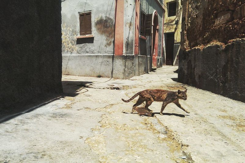 Taking Photos Enjoying Life Old Buildings Morocco Traveling Mazagan Travel Street Old Cat Street Cat