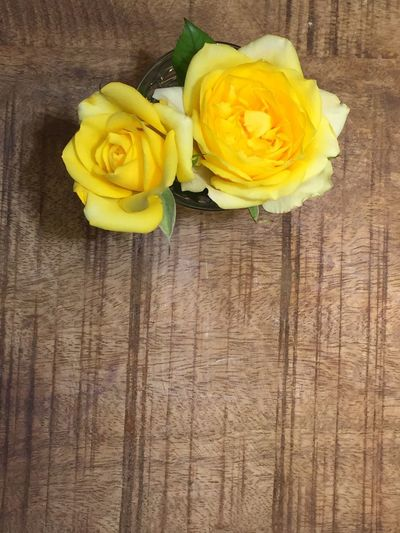 High angle view of yellow roses on table