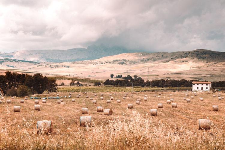 A rural scene of a farm in sicily, italy.