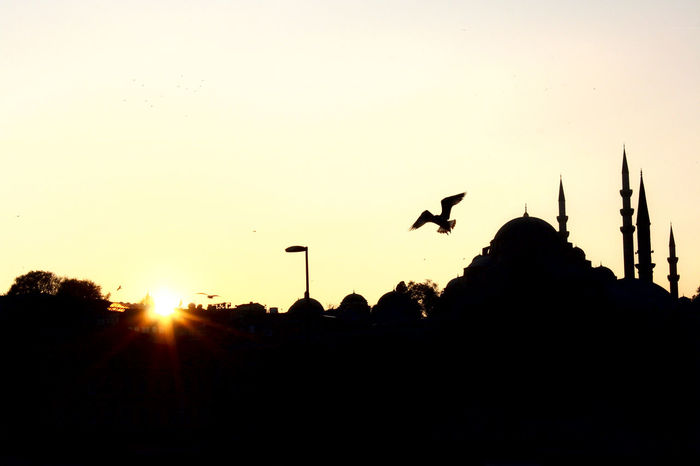 Freedom Holiday Istanbul Peace Turkey Bird Destination Flying Konstantinopolis Mosque No People Outdoors Religion Silhouette Spread Wings Sunset