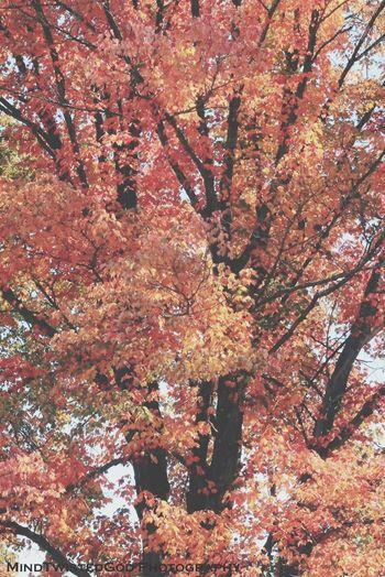 Like Trees Fall Colors