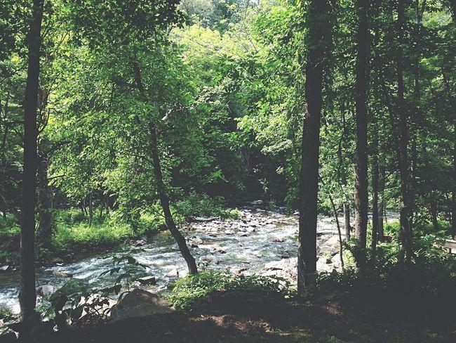 Hidden gem Green Nature Quebec