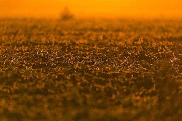 Full frame shot of field against sky during sunset