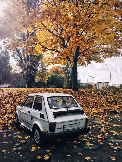 Paint The Town Yellow Fiat Poland City Life Car Youngtimer Parking Autumn Leaves Yellow Mobility In Mega Cities