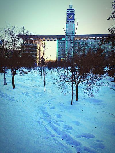 冬日 清晨的学校 First Eyeem Photo