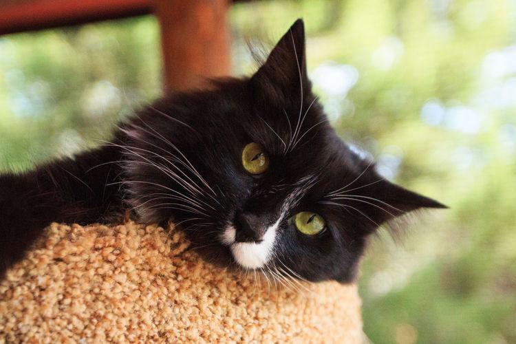 Black cat Pets Domestic Animals Animal Themes One Animal Feline Yellow Eyes Indoors  No People Close-up Mammal Domestic Cat Black Cat Cats