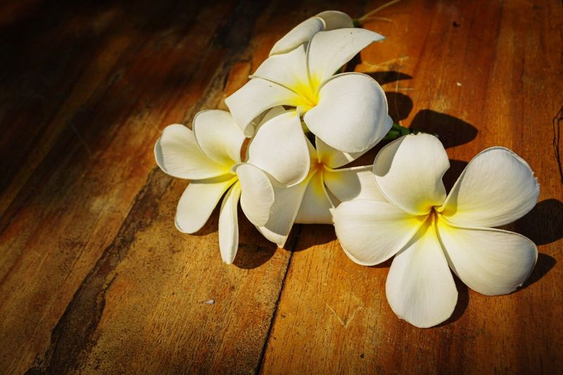 Close-up of white flowers on wooden table