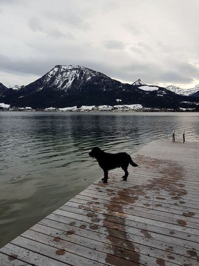 Dog in lake against sky during winter