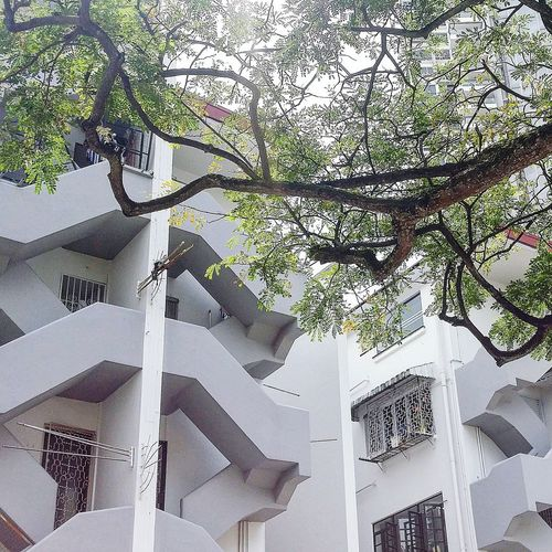Residences Flats Tiong Bahru Architecture Sg_architecture Singaporearchitecture Tree Singapore