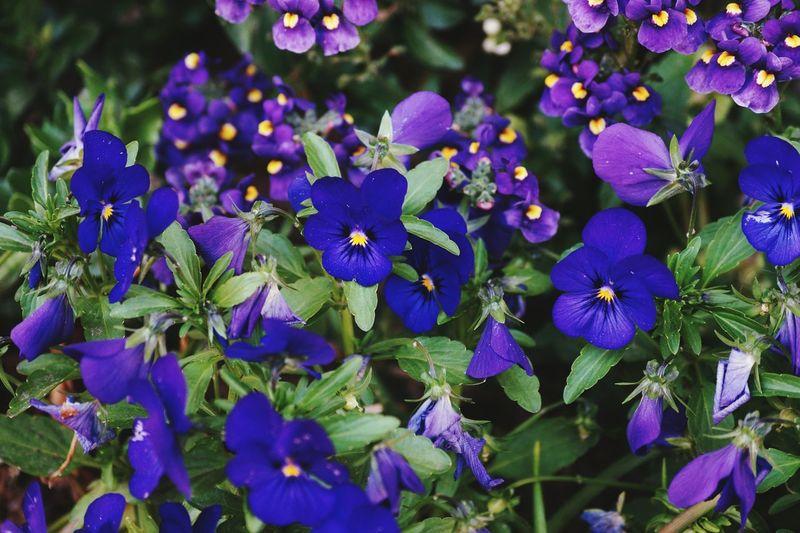 Essence Of Summer Flowers Swedish Nature Fine Art Photography Colour Of Life 2016 Juni Niklas BYOPaper! The Week On EyeEm Perspectives On Nature Summer Exploratorium