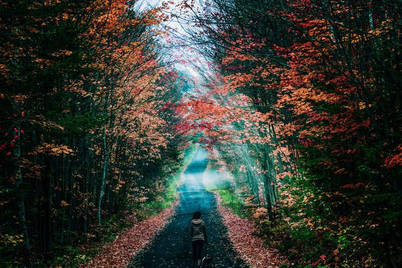 Woman walking on road amidst trees during autumn