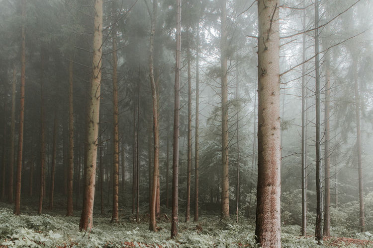 Beauty In Nature Foggy Foggy Day Foggy Forest Foggy Landscape Foggyforest Forest Landscape Nature No People Outdoors Tranquility Tree WoodLand