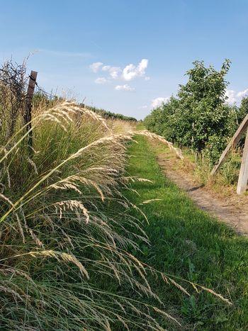 natura Tree Rural Scene Agriculture Cereal Plant Field Crop  Sky Landscape