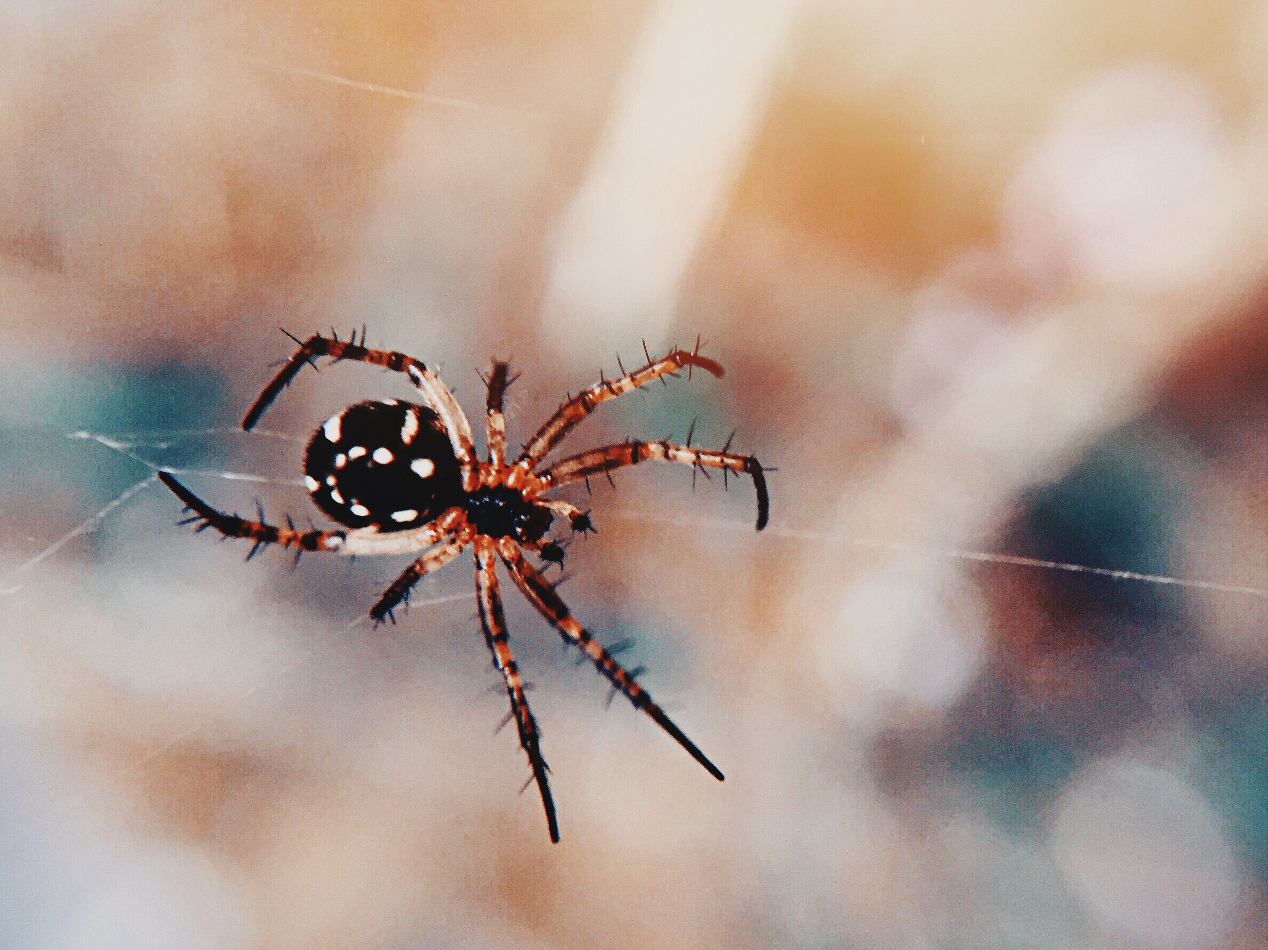 insect, animal themes, one animal, animals in the wild, wildlife, spider, close-up, spider web, focus on foreground, selective focus, day, arthropod, nature, outdoors, no people, zoology, arachnid, full length