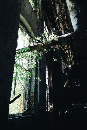 Plants growing on abandoned building