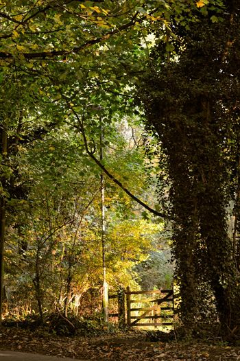 Taking Photos Autumn Glow This Is Where I Live... My Gloucestershire Autumn Colors Autumn Collection Autumn Trees