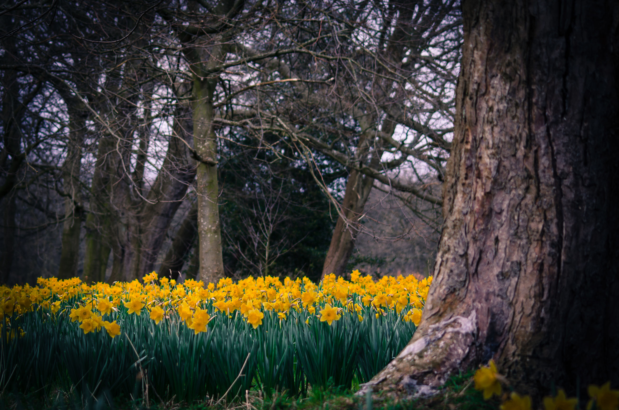 flower, tree, yellow, growth, tree trunk, nature, beauty in nature, freshness, fragility, tranquility, branch, tranquil scene, forest, blossom, day, no people, field, outdoors, plant, in bloom