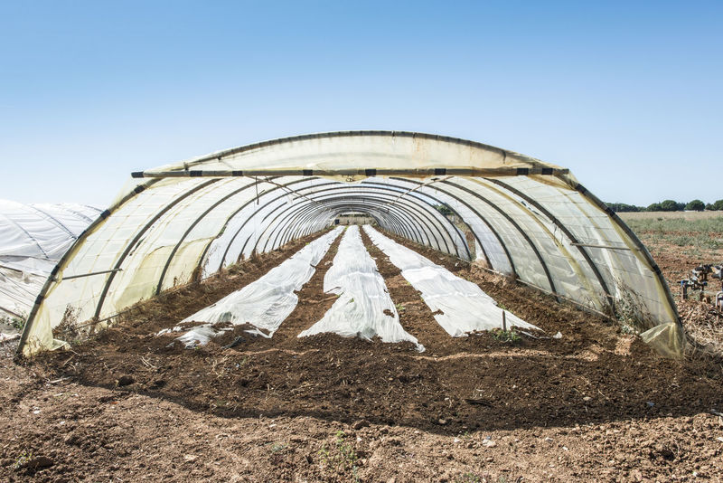 Greenhouse Greenhouse Plants Green Houses Strawberry Sky Day Nature No People Architecture Land Landscape Field Outdoors Sunlight Built Structure History Environment The Past Clear Sky Dirt Religion Blue Copy Space Art And Craft