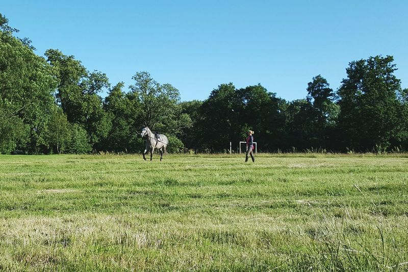 Nature Beautiful Nature Horses Animals Sport Summer Landscape Sunny Sky And Clouds Walking Around