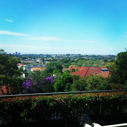 My view this morning! Sydney Sunny Goodweather