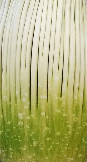 Pattern Pieces Full Frame Backgrounds Natural Pattern Green Close Up Extreme Close Up Colour Images Intricacy Leaf Pattern Photography Vertical Textured  Amorphophallus Titanum Corpse Flower Inflorescence Titan Arum EyeEm Nature Lover Engage Your Senses Eye4photography  Discover  Nature Plant Followme