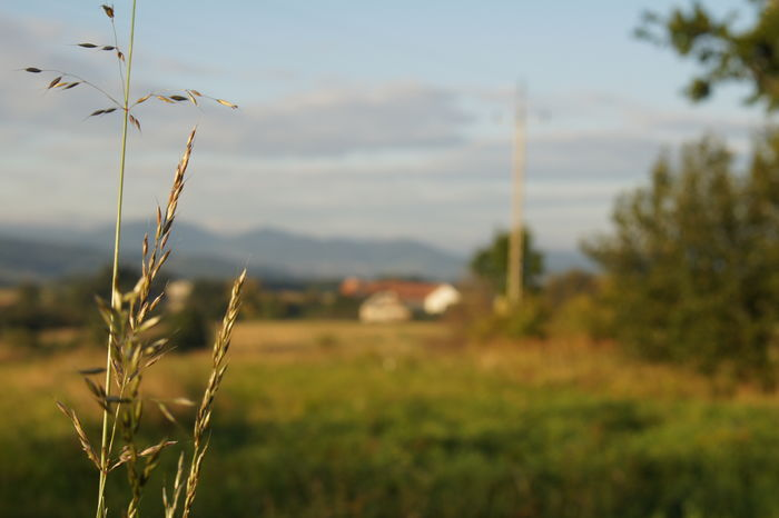 Beauty In Nature Close-up Countryside Day Focus On Foreground Grass Growing Landscape Nature No People