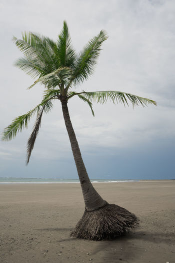 Costa Rica Beach Beauty In Nature Nature No People Palm Tree Sand Scenics Sea Tranquil Scene Tranquility Tree