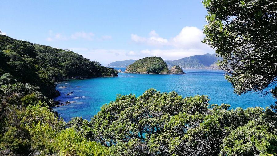 Stunning Oke Bay Blue Water Pohutukawa Island Stunning View Water Sea Nature Tree Sky Outdoors Day Blue Beauty In Nature Beach Scenics