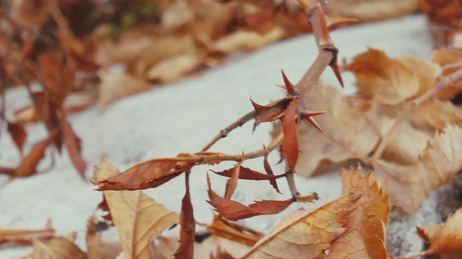 Autumn colors EyeEm Selects Close-up Focus On Foreground No People Nature Plant Part Leaf Day Outdoors Plant Selective Focus Beauty In Nature