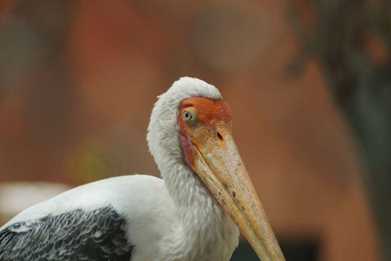 CLOSE-UP OF A CUTE BIRD LOOKING AWAY