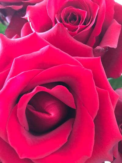 Love is all we need Happy Valentine's Day! All We Need Is Love A Rose Is A Rose. Rosé Flower Petal Rose - Flower Nature Flower Head Beauty In Nature Fragility