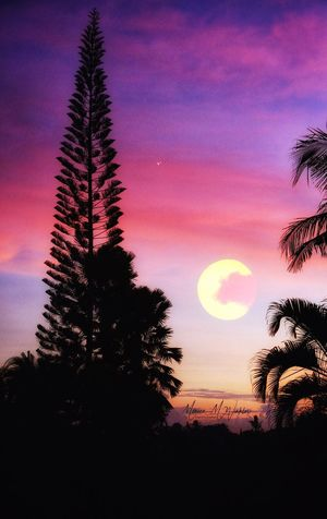 Sunset Hill Plant Scenics - Nature Nature Sunset Cloud - Sky Outdoors No People Idyllic Tranquil Scene Majestic