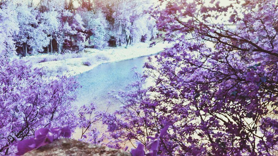 River Collection River Dreams Dreamer Icy Wonderland Purple River Purple ♥ Unrealistic Unreal The Magic Mission