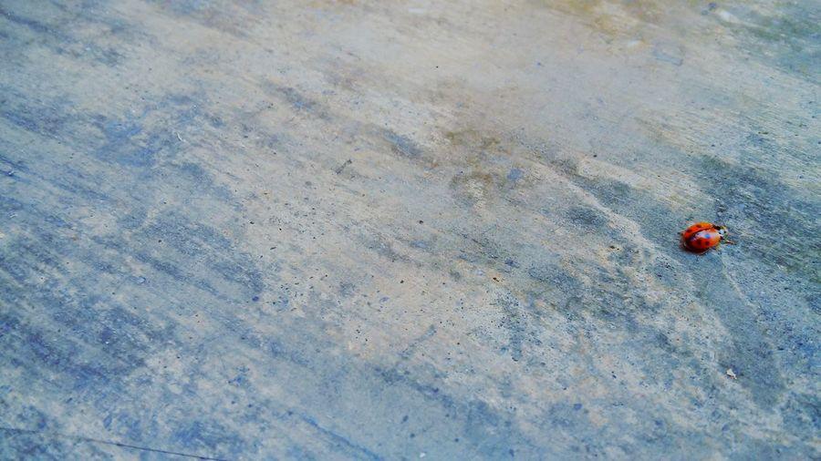 Ladybug Bluefilter