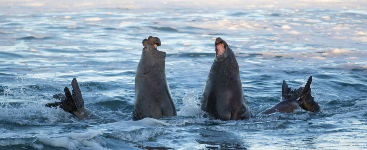 Animals in sea