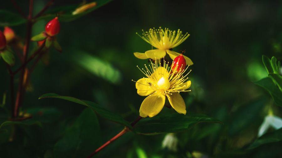 Beautiful Petal