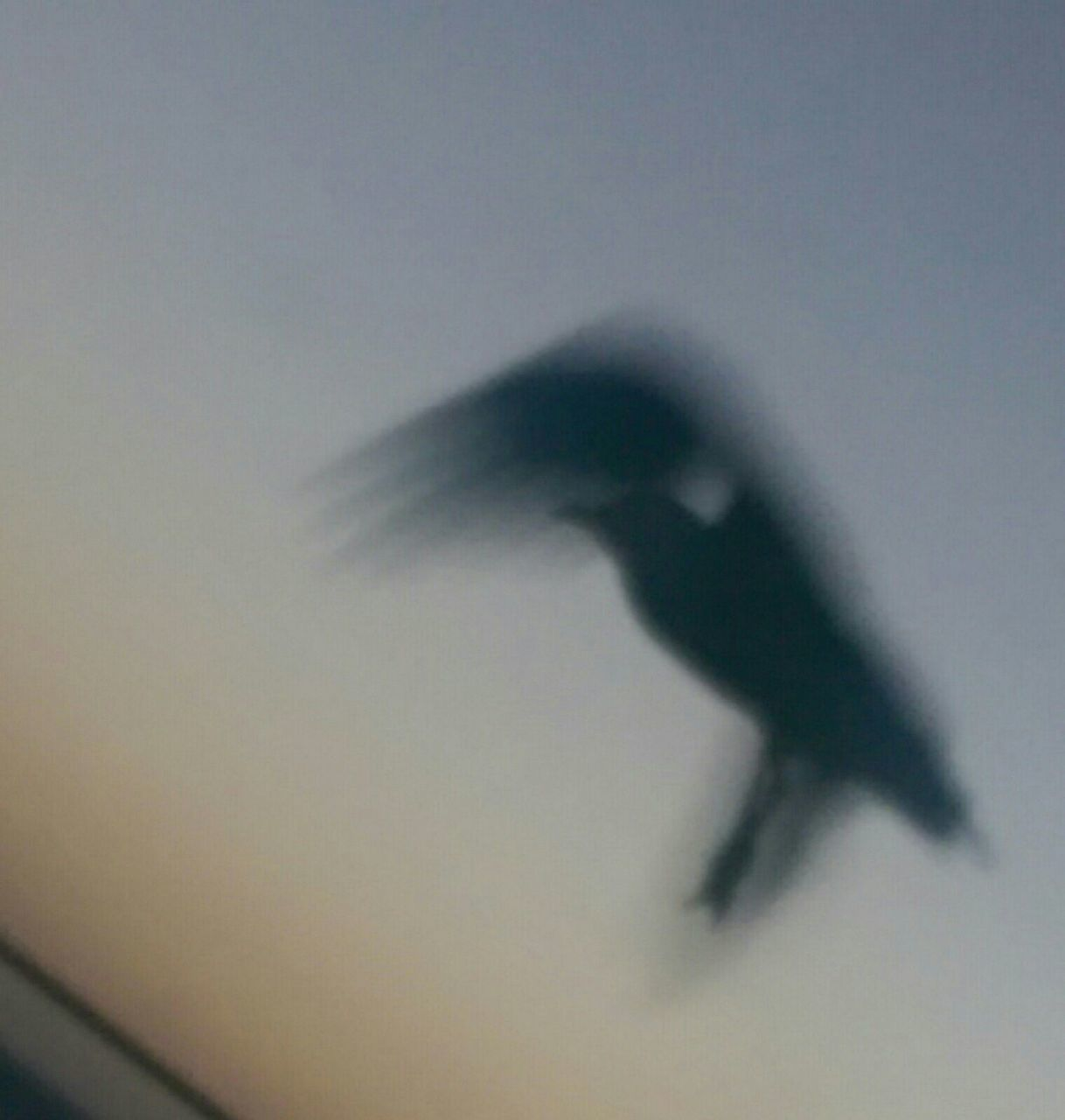 animal themes, one animal, animals in the wild, bird, low angle view, flying, animal wildlife, no people, spread wings, mid-air, shadow, day, outdoors, raven - bird, nature, bat - animal, sky, close-up, bird of prey, mammal