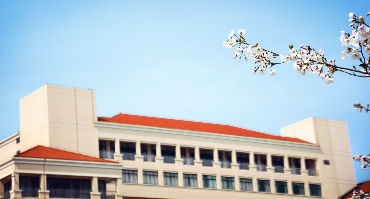 building exterior, architecture, built structure, sky, nature, plant, low angle view, building, day, flower, flowering plant, no people, city, clear sky, growth, outdoors, freshness, fragility, beauty in nature, tree, office building exterior, cherry blossom